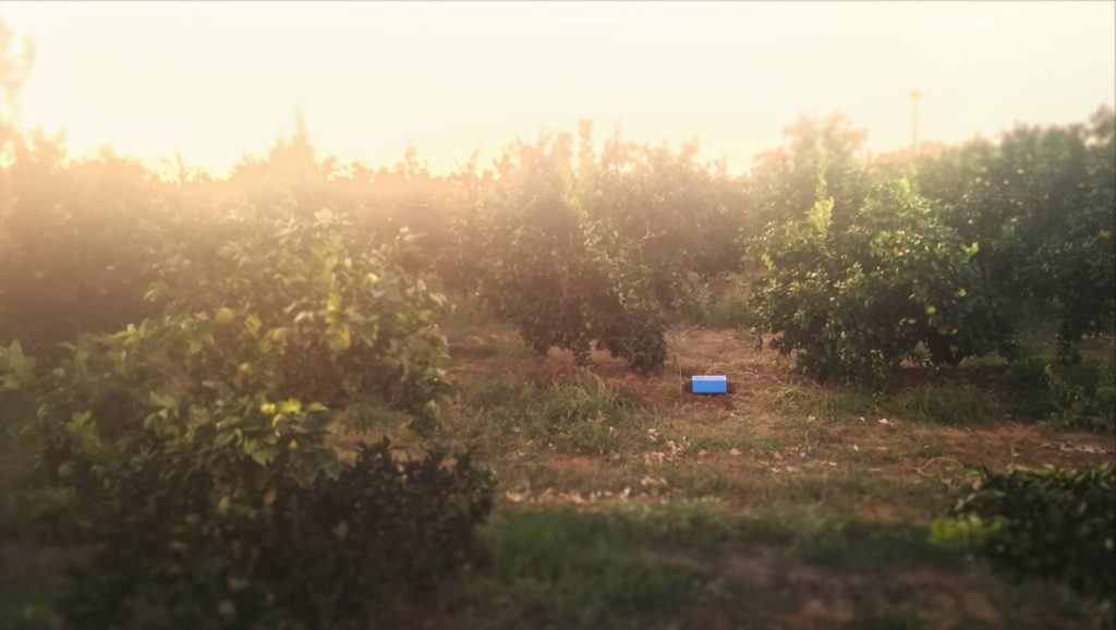 Revotree sensors in orchards